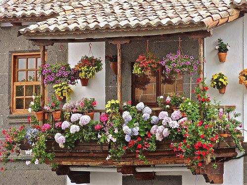 цветочная красота на балконе