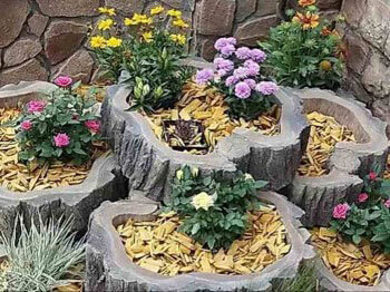 цветы на пнях
