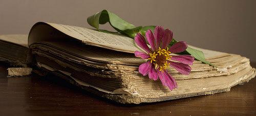 цветок закладка