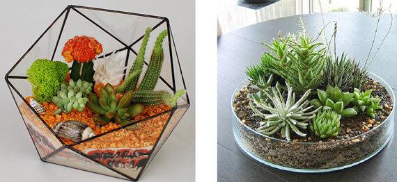 Флорариум – зеленое обустройство домашнего интерьера