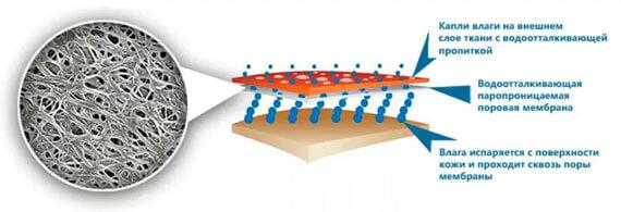 структура тканевой мембраны