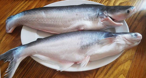 здоровая рыба